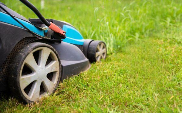 Na czym polega mulczowanie trawnika?
